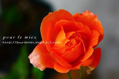 5254_20120525122747.jpg