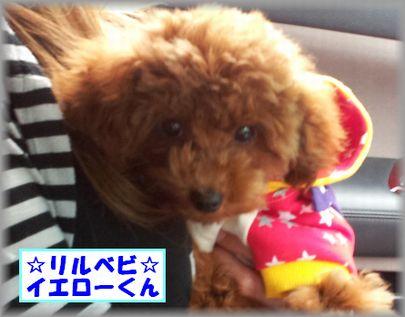 2012-05-03 13.57.16イエローくん