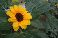 flower0701.jpg