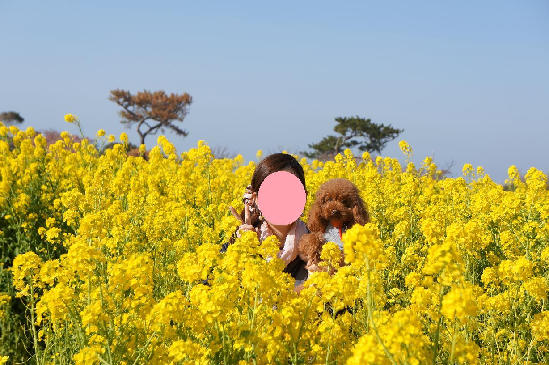 atsumi-Link-mef-DSC06664s.jpg
