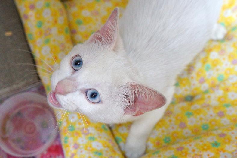 cat-DSC05331s.jpg