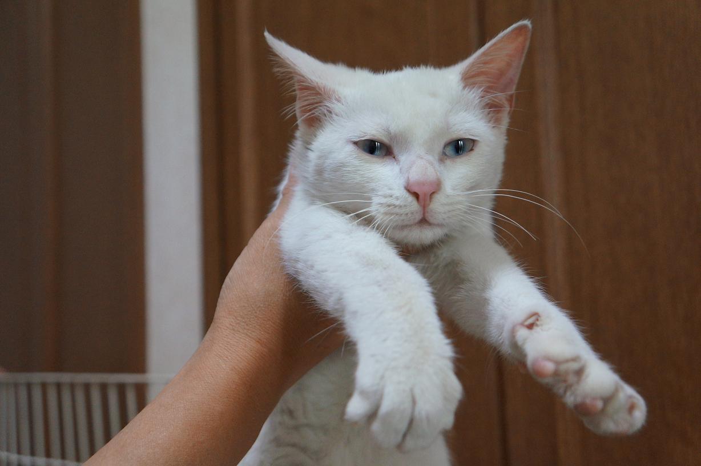 cat-DSC05370s.jpg