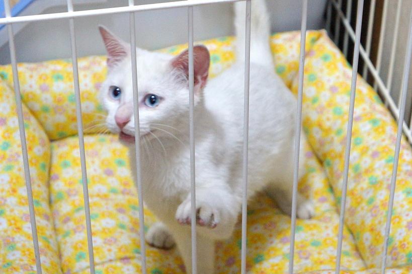 cat-DSC05372s.jpg