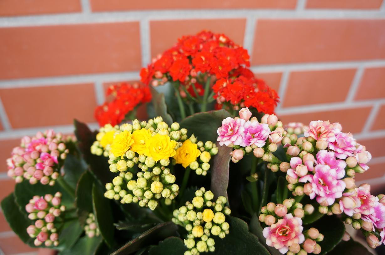 plant-DSC04025s.jpg