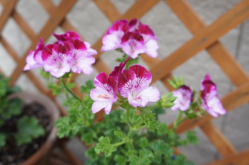 plant-DSC04028s.jpg