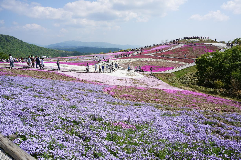shibazakura-DSC04095s.jpg