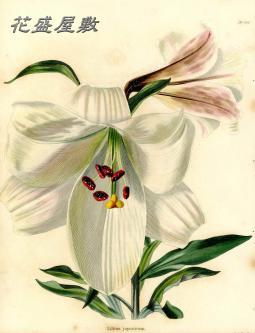 BOTANICAL CABINET 1820