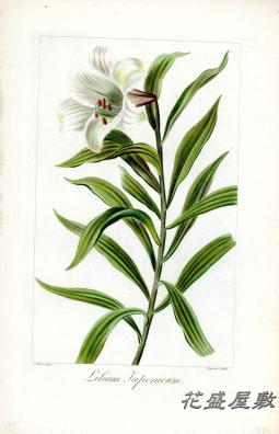 Bessa 1810