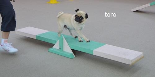 torosi-so