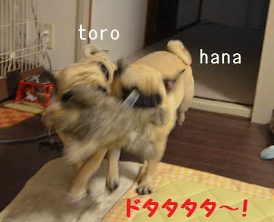 hanatoro1