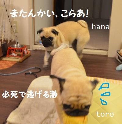 hanatoro3