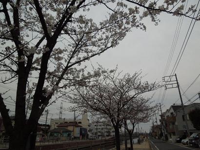 kinnjyonokawa.jpg