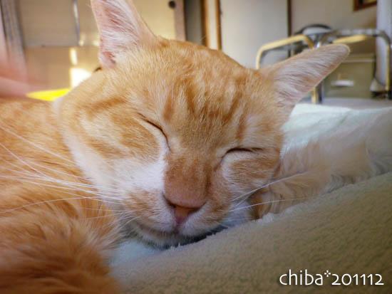 chiba11-12-149.jpg
