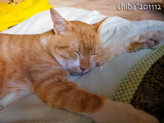 chiba11-12-152.jpg