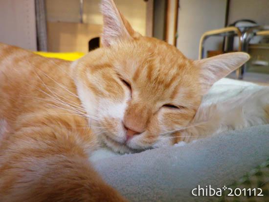 chiba11-12-154.jpg