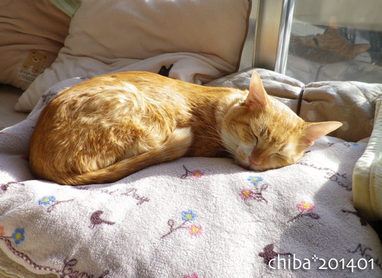 chiba14-01-145.jpg
