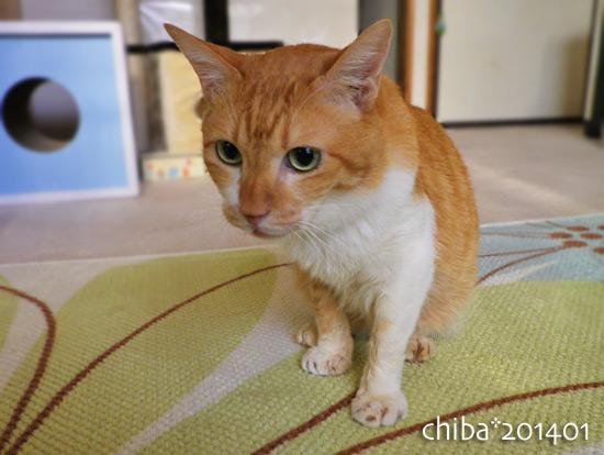 chiba14-01-86.jpg