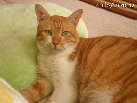 chiba14-12-05.jpg