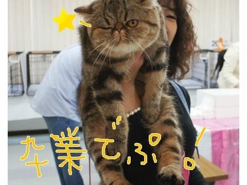 18)卒業でぷ!