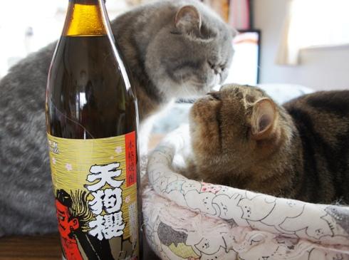 9)お酒でぢよ