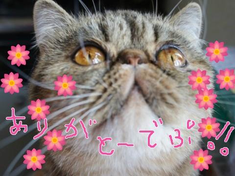 16)ありがとうでぷぷ