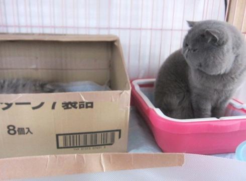 4)ハッピーターンのお箱の中に