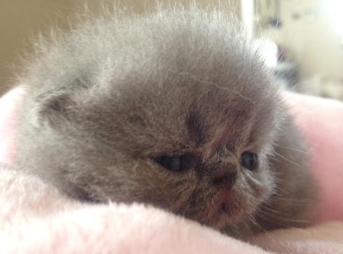 7)眠いコグマちゃん