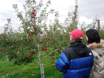 りんごの樹のオーナー様