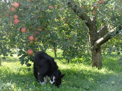 犬のふじ と りんごのふじ
