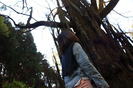 2014Nov軍刀神社桂の木