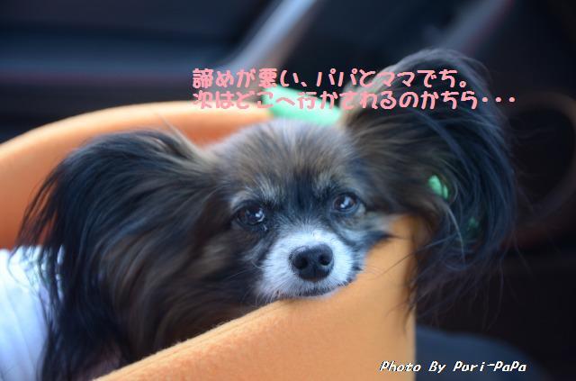 DSC_0014_20120529203623.jpg