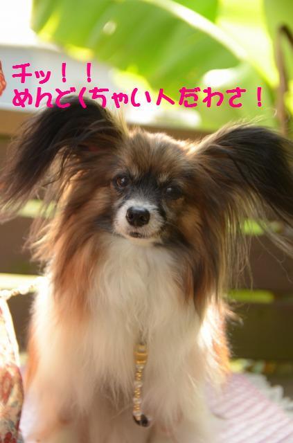DSC_1094_20120620213311.jpg