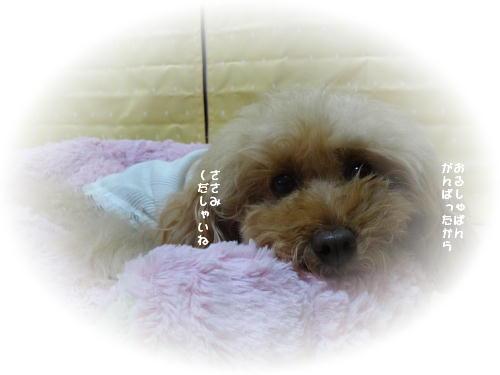 purin_20121222230047.jpg