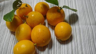 2013年檸檬