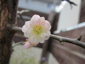 2013春IMG_5767