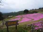 P1060156花の谷
