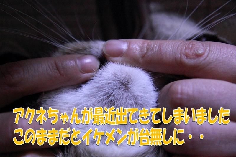 図5_compressed