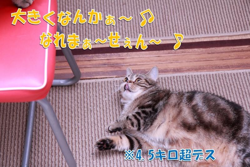 2012122305.jpg