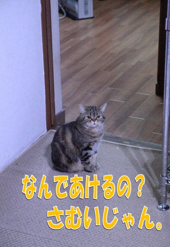 22_20121216194537.jpg