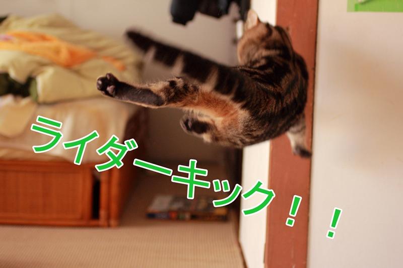 IMG_36181.jpg