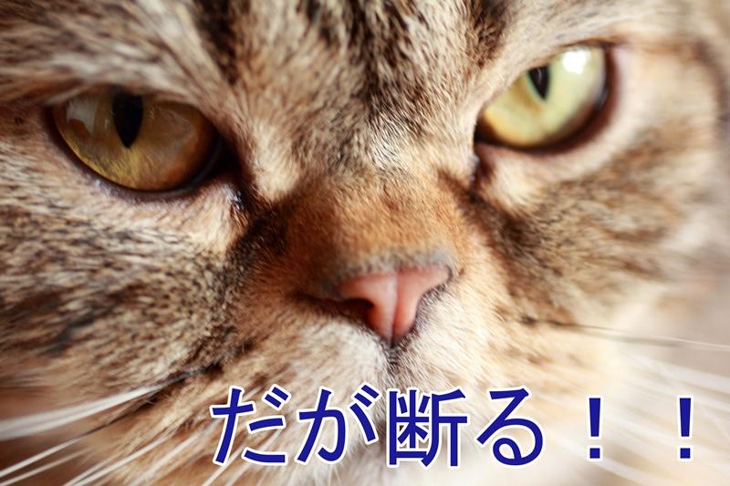 IMG_37831.jpg