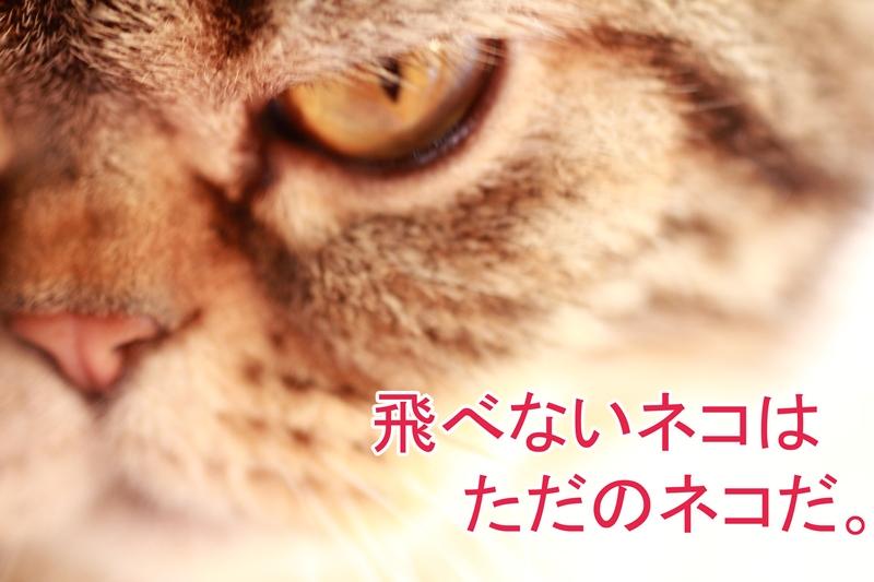 IMG_39121.jpg