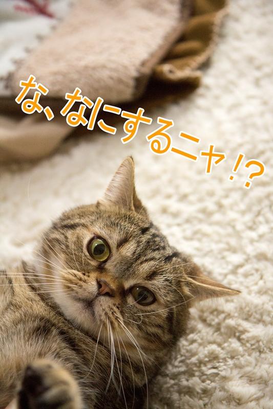 IMG_4741.jpg