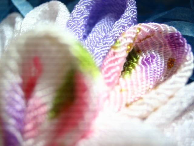 可愛いお花でしょ♪アップでーす
