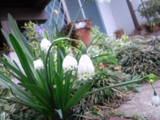 花すずらん水仙