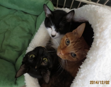 2014.12.02-1 ochibi trio