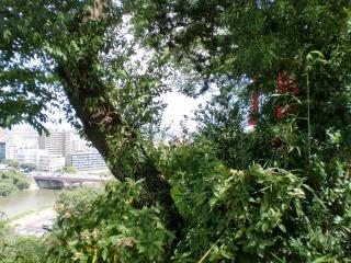 2013年09月01日 愛宕神社・境内見晴らし2