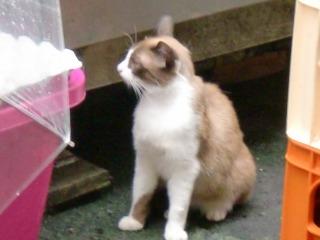 2013年09月07日 一閃閣・猫