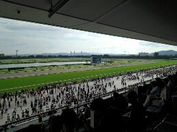 京都競馬場本馬場
