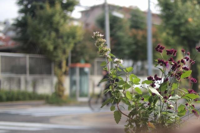 koetaro014.jpg
